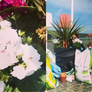 På taket planteras de för fullt! @avalon_gbg