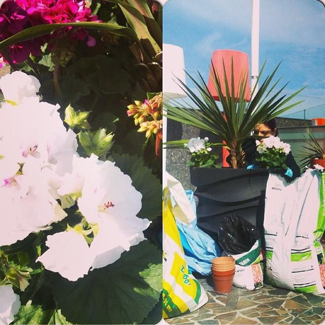 På taket planteras de för fullt! @avalon_gbg #avalon_gbg #göteborg
