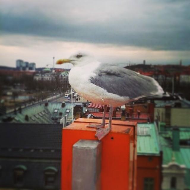 Vi välkomnar en ny gäst till Avalon. Måsen har flyttat upp på bokstaven N i vår logga på fasaden där han verkar trivas fint. Visst är han ett härligt vårtecken? @avalon_gbg #avalon_gbg #våriGöteborg #Göteborg #Gothenburg #hotell #äntligenvår